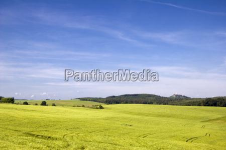 woodland fields