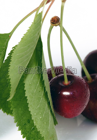 suess frische frucht obst steinfrucht kirsche