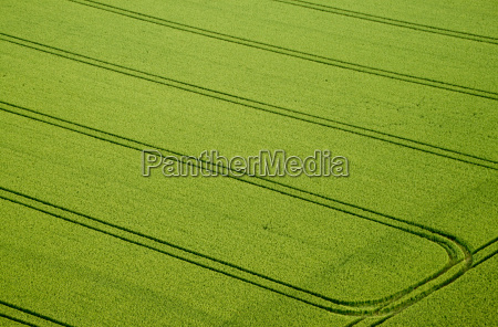 aerial view cornfield