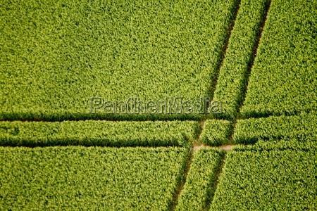 aerial view kornfeld