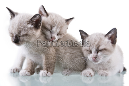 baby kittens sleeping
