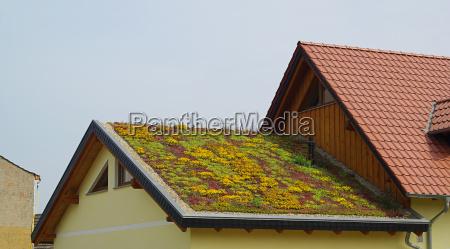 gruendach green roof 01