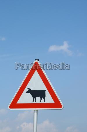 warnschild cows