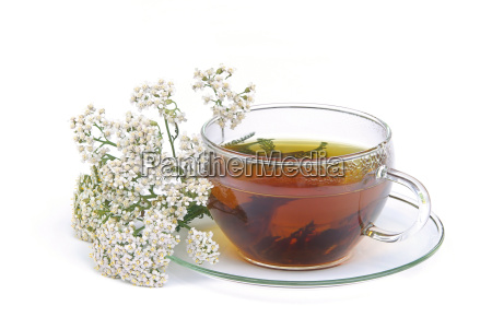 tee schafgarbe tea yarrow 01