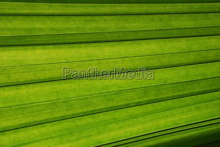 palmblatt nahaufnahme