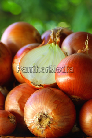 harvested onions of the farm