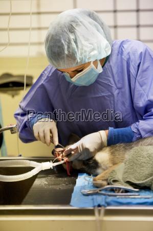 veterinaerzahnheilkunde
