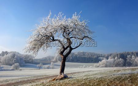 verzauberter baum im winter