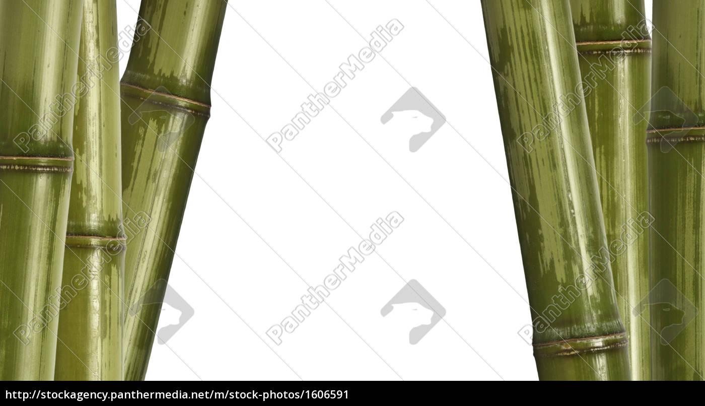 bambus, hintergrund, isoliert, auf, weiss - 1606591