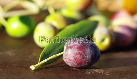 mature olive on leaf