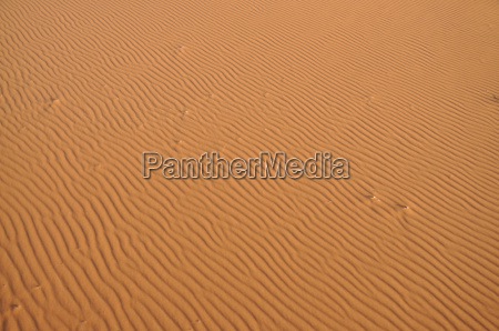 sand dune in the sahara morocco