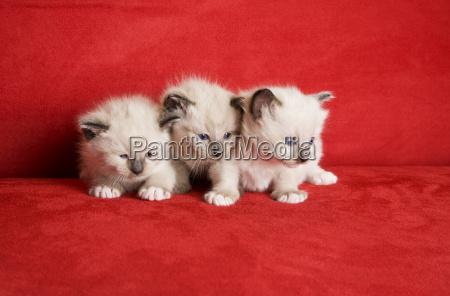 drei kleine kaetzchen
