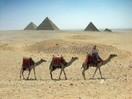 drei kamelkarawane durch den sand wueste
