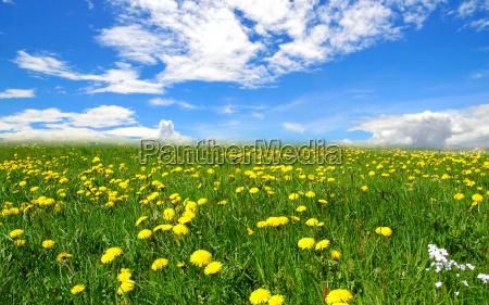 landschaft wolken wiese