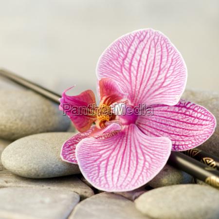 orchideenbluete stilleben