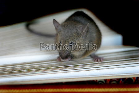 educational mouse