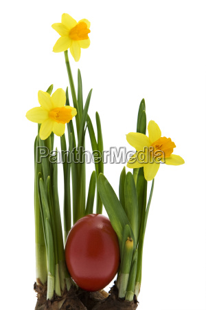 easter eggs with yellow daffodils