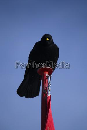 blue bird black swarthy jetblack deep