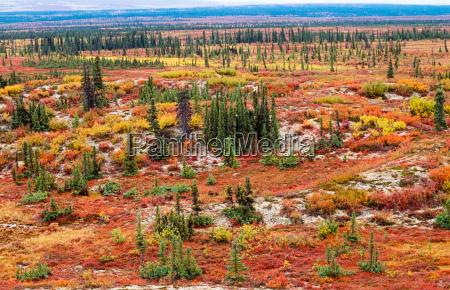 tundra landschaft in der herbstfarbe