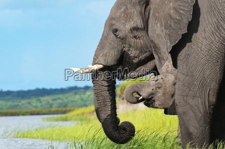 elefantenfamilie 01jpg