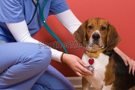 vet checkup