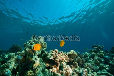 koralleozean und fische