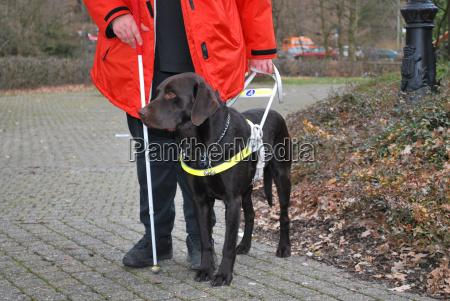 blindenhund