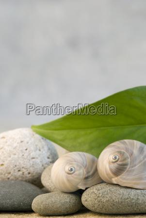 gruenes blatt mit kieselsteinen und schneckenschalen