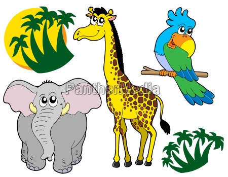 african animals collection 3