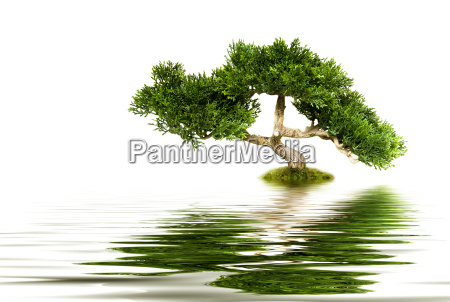 bonsai baum reflektiert in wasser