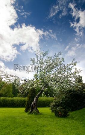 baum park garten blume pflanze wolke