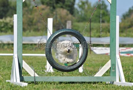 haustier kuscheltier hund springen springend springt