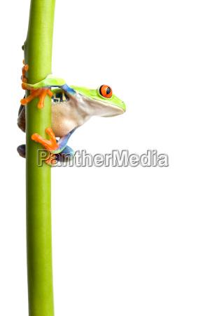 frosch auf betriebsstamm isoliert