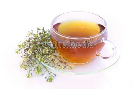 tee schafgarbe tea yarrow 03