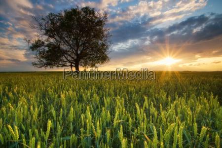 luz do sol no campo