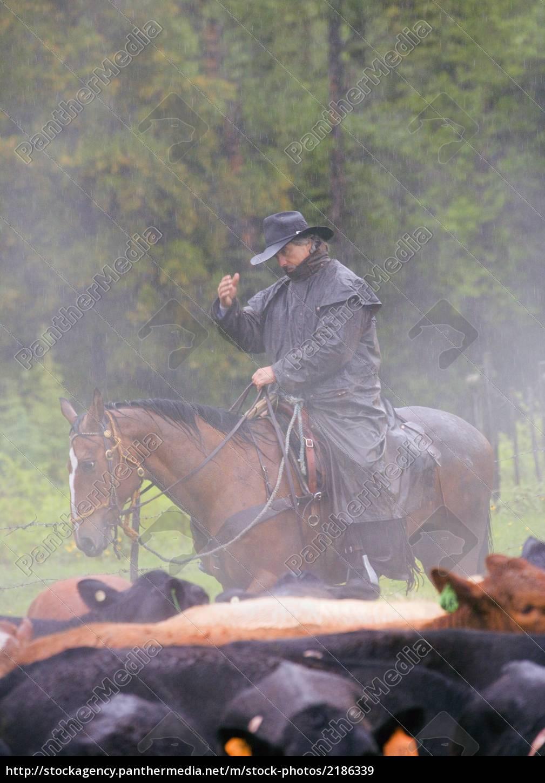 cowboy hut von rindern im regen - Lizenzfreies Bild - #2186339 ...
