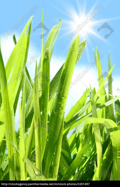 Hohes Gras Gehen Gegen Den Blauen Himmel Lizenzfreies Bild