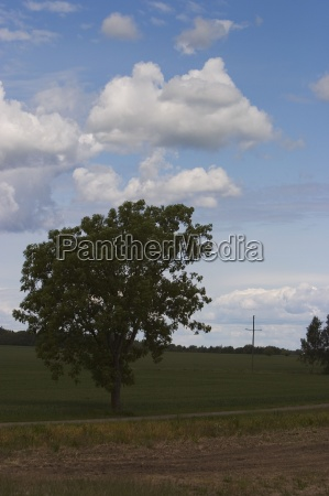 blue tree trees photography photo picture