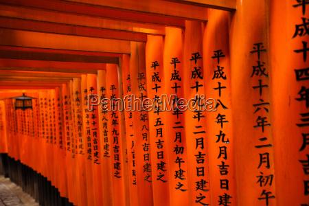 japanischer torii gang