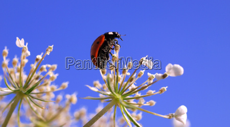 ladybeetle exploring