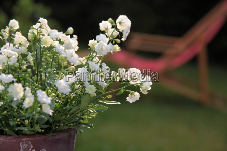 white flowers and red deckchair