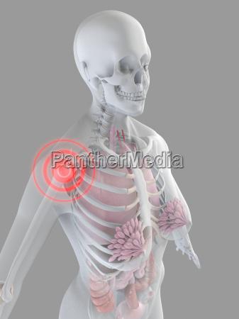 weibliche anatomie mit hervorgehobenen schulter