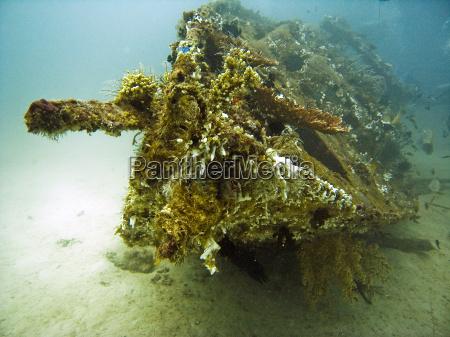korallenbewachsenes schiffswrack