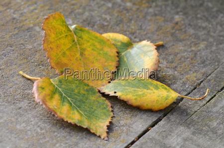 background autumnal leaves