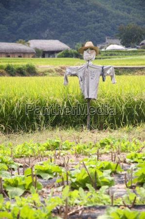 scarecrow south korea