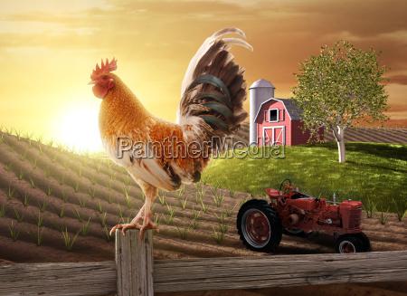 country farm morgen