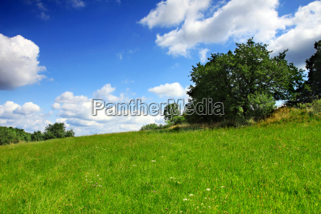 czech landscape green meadow with