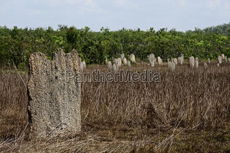 kompass termitenhuegel im litchfield np