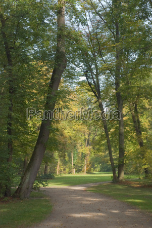 autumn forest with trail