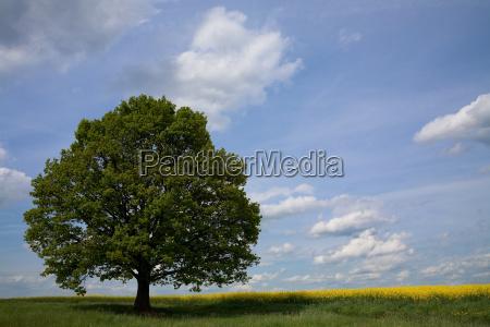 lindenbaum